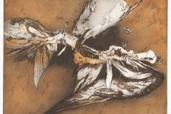 dode vogel 14